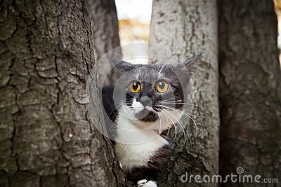 A scared cat on a tree