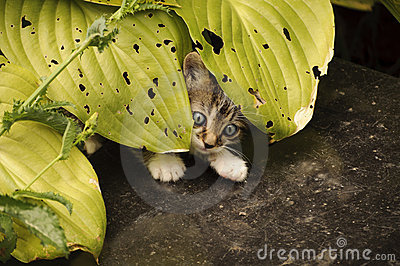 Scared kitten hiding