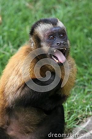 Cartoon Monkeys Gallery 5  |Scared Monkey Animation