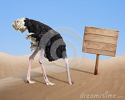 Scared Ostrich Burying Head In Sand Near Blank Stock Photo