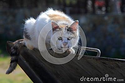 Scared street cat