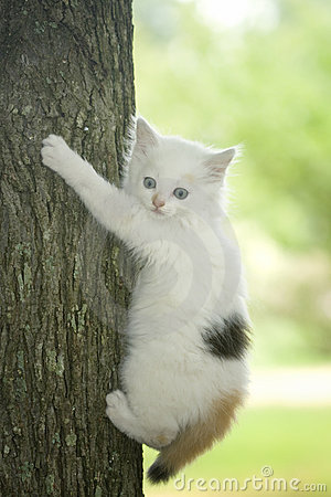 Scared white kitten in tree