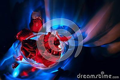 Scarlet roses on a blue background