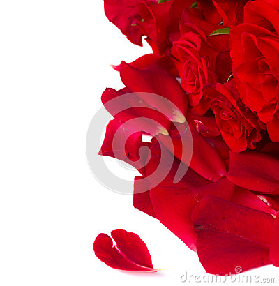 Scarlet  roses with petals