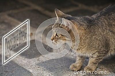 Scarry cat