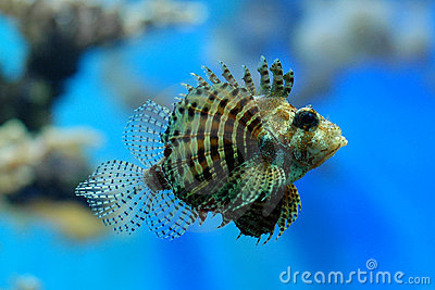 clown hair styles scary fish stock photo image 14663600 4175