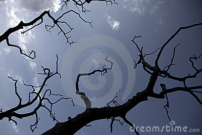 Scary forest branches