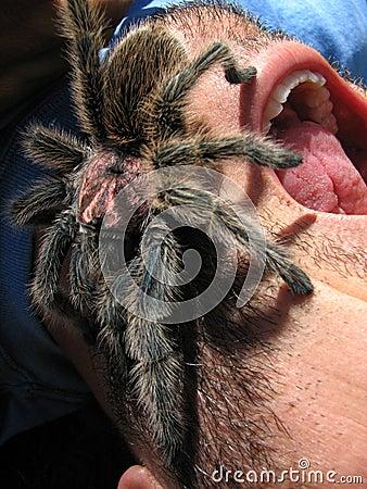 scary tarantula on screaming face