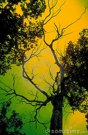 Scary Tree Stock Photo