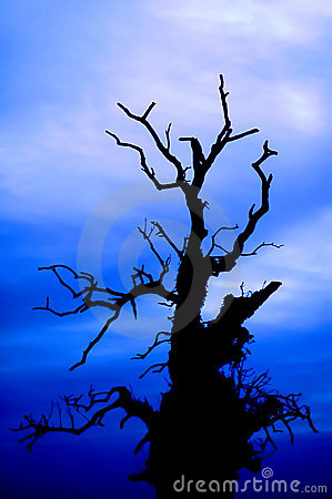 Scary tree on the blue sky