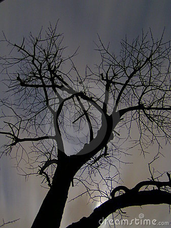 Scary tree at night