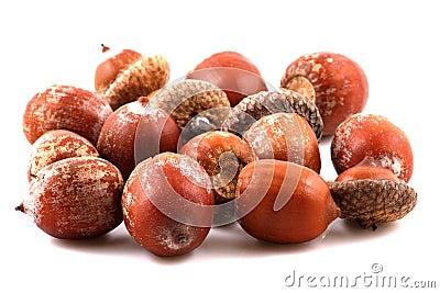 Scattered acorns