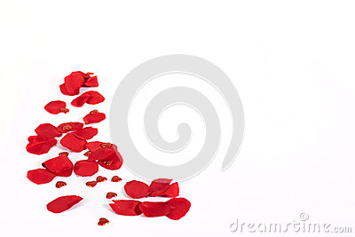 Valentines roses and hearts