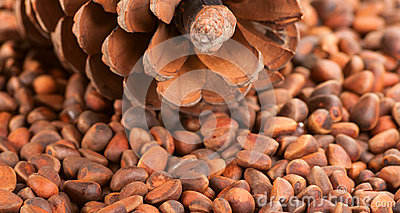 Scattering of pine nuts and a large pine cone.