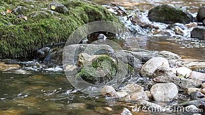 Scena della natura della torrente montano