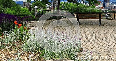 Scena Hamilton, Kanada, linia horyzontu z kwiatami w przodzie 4K zdjęcie wideo