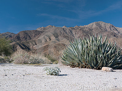 Scene in the Anza-Borrego Desert
