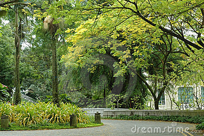 Scene - Fort Canning Hill