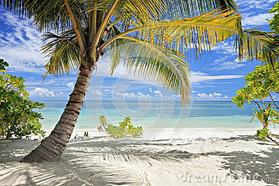 A scene of palm trees and beach