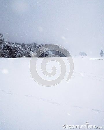 Snow fallen upon a woodland edge Stock Photo