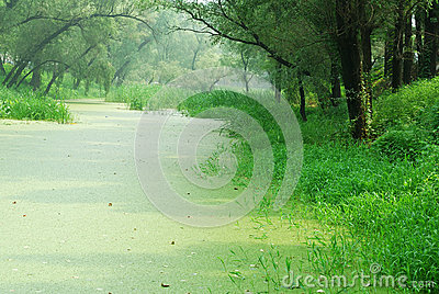 Scenery with forest and water plants
