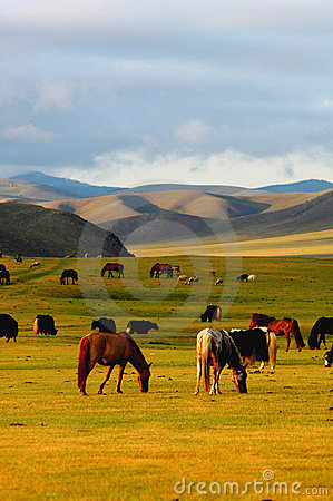 Free Scenery In Mongolia Stock Photo - 12047170