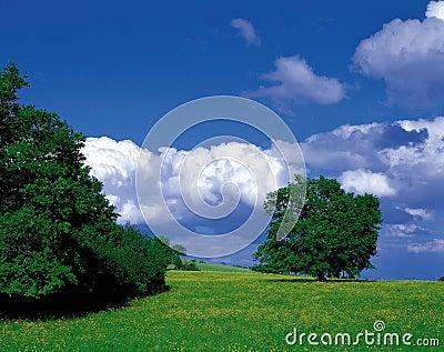 Scenery of Nature