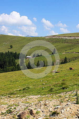 Scenery from Transalpina