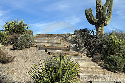 Scenic Arizona Desert Saguaro Cactus Landscape
