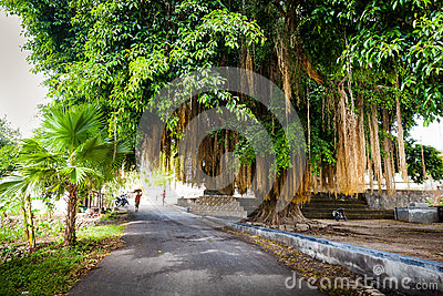 Scenic big tropical green tree on the white background Stock Photo