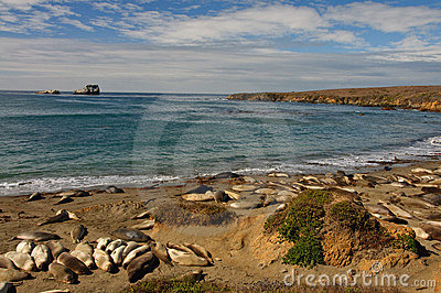Scenic coastal seascape nature with seals on beach