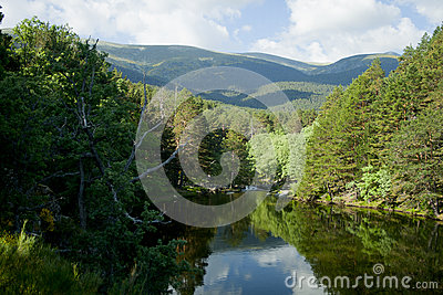 Scenic dam surrounded by a forest