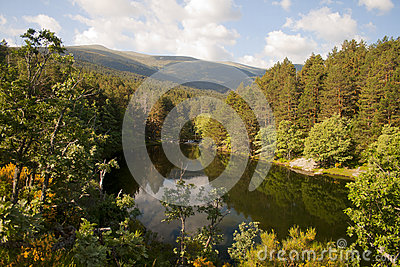 Scenic dam  surrounded by forest