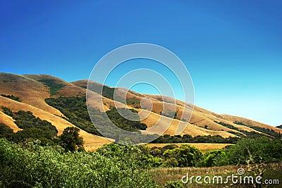 Scenic hillside