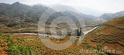 Scenic panorama of rice field terraces