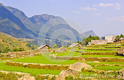 Scenic of rice terraced fields