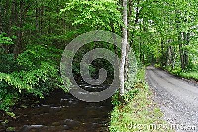 Scenic Road & Creek