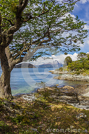Free Scenic Snow Capped Chilian Mountains Seen From Tierra Del Fuego National Park Royalty Free Stock Photos - 43546848