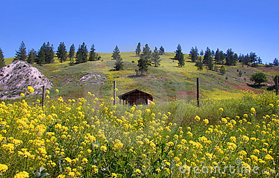Scenic summer  landscape in Montana
