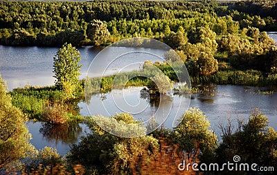 Scenic view of forest - Medgidia - Romania.