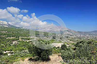 Olive groves and Ataviros mountain, Rhodes island - Greece
