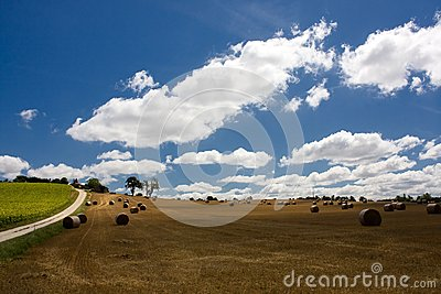 Scenic view on summer agricultural landscape
