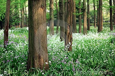 Scenic view of tree trunks with wild flowers