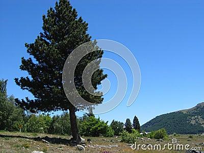 Sceniczny drzewo obszarów wiejskich
