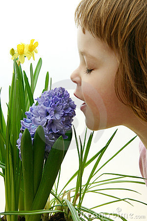 Free Scent Of Spring Royalty Free Stock Images - 2016239