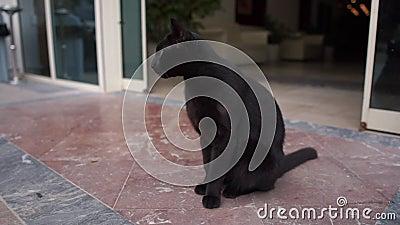 Schöne schwarze Katze sitzt am Eingang zum Gebäude in der Zeitlupe stock video footage