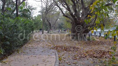 Schöner Herbstpark bei Sonnenuntergang Waldweg, bedeckt mit Bäumen mehrfarbiges Laub im Frühjahr gefallen Blätter stock video