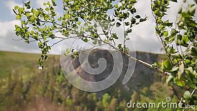 Schöner Plan von den Baumasten, die in den Wind beeinflussen Schöne Gebirgslandschaft stock video
