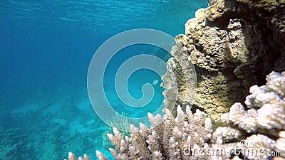 Schönes Korallenriff Leben im Ozean stock video footage