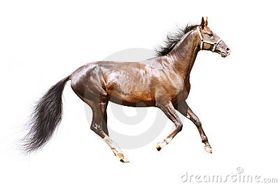 Schacht Stallion getrennt